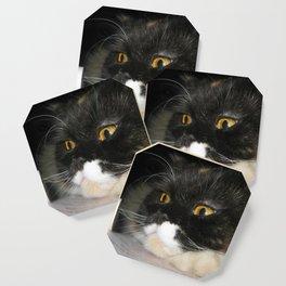 Cat Study Coaster