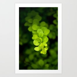 Tiny Leaves by Althéa Photo Art Print