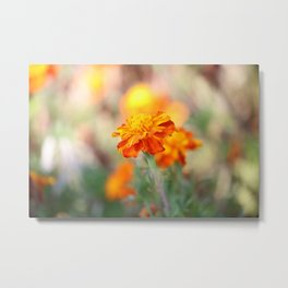 Marigolds In The Fall Metal Print