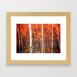 Birch Grove Framed Art Print