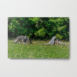 Tree Stumps on a Meadow Metal Print