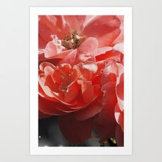 Flower beautiful pink Art Print