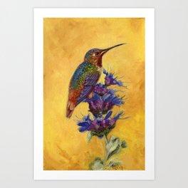 Allen's Hummingbird on Bee Balm Art Print