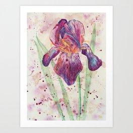 beauTEAful blooms: Iris Art Print