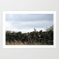 Partridge on a Wall Art Print