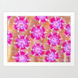 Pink Calliope Rose Art Print