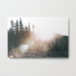 Sunny Forest III Metal Print