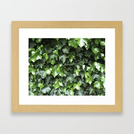 Evergreen Ivy Framed Art Print