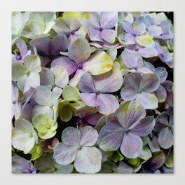 Hydrangea flower macro pattern Canvas Print