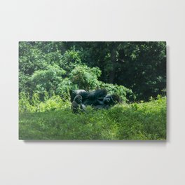 Pittsburgh Zoo - Gorilla Metal Print