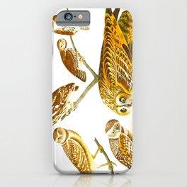 Burrowing Owl Illustration iPhone Case