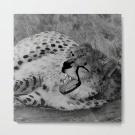 Cheetah fangs Metal Print