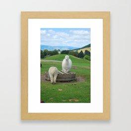 Alpaca Framed Art Print