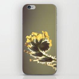 Curl iPhone Skin