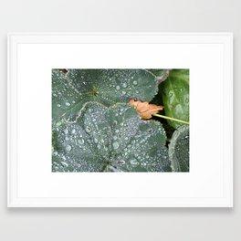 Water Droplets on Leaves Framed Art Print