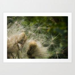 Cattail seeds Art Print