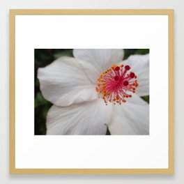 Hawaiian Hibiscus Framed Art Print