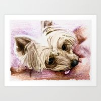 yorkie Art Prints featuring Yorkie by 92Pretzels