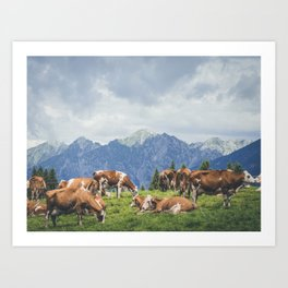 breeding of cows resting on mountain landscape Art Print
