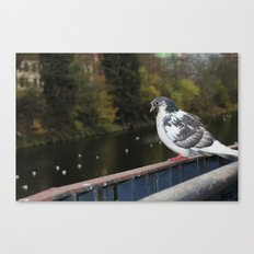 Pigeon by Canal Canvas Print