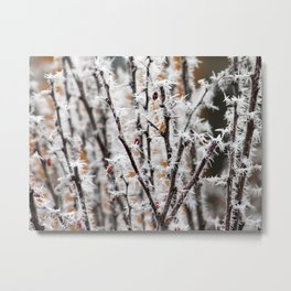 Ice on Thorns Metal Print