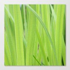 Mystic Green Canvas Print