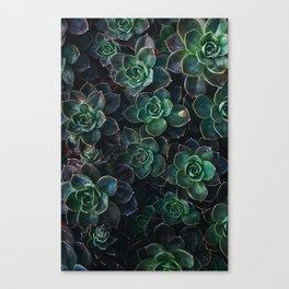 The Succulent Green Canvas Print