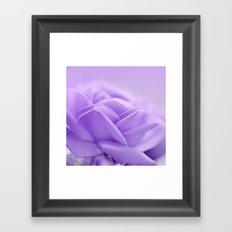 Rose 179 Framed Art Print