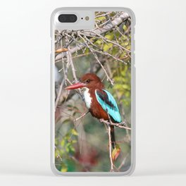 Halcyon smyrnensis Clear iPhone Case