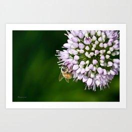 Honey Bee And Lavender Flower Art Print