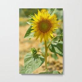 Cheerful sunflower Metal Print