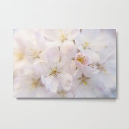 Ornamental Cherry Blossom Metal Print