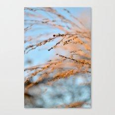 golden leaves against a blue sky. Canvas Print