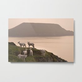 Little lambs on a cliff Metal Print