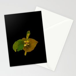 Kaempferia Galanga Mary Delany Vintage Botanical Floral Collage Delicate Paper Flowers Stationery Cards