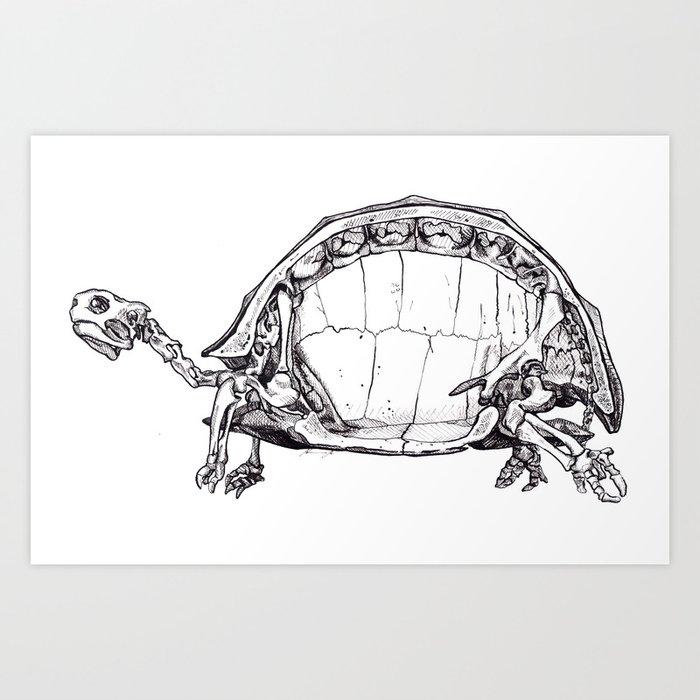Anatomy Of A Turtle Art Print By Sobottostudies Society6