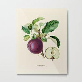 Purple Apple Antique Botanical Illustration Metal Print