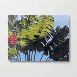 Sunlight and Shadow Metal Print