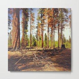 Burnt Ponderosa Forest Metal Print