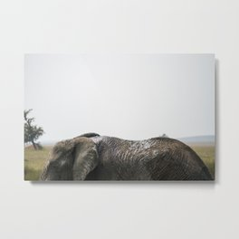 Behind the Ears of an Elephant Metal Print