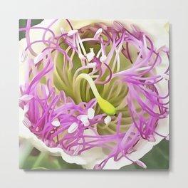 Caper Flower Blossom Metal Print