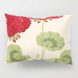 Double Zonal Pelargonium Vesta Vintage Flower Pillow Sham