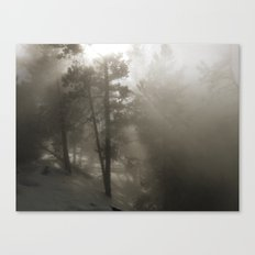 Sunlight and Fog Through Trees Canvas Print