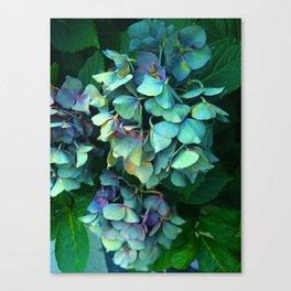 Treasure of Nature VII Canvas Print