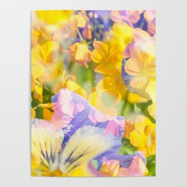 The Iris and Yellow Pansy Flowers Poster