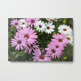 White And Lavender Tutsan Flowers Metal Print