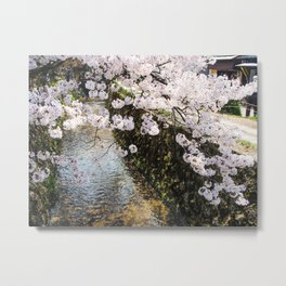 Delicate Cherry Blossoms In Japan Metal Print
