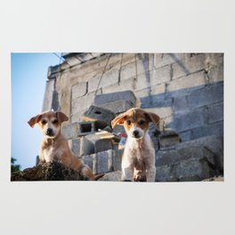 Lovely Puppies of Mauritius Rug