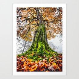 Under Autumn Tree Art Print