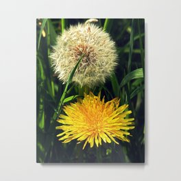 Taraxacum Officinale Metal Print